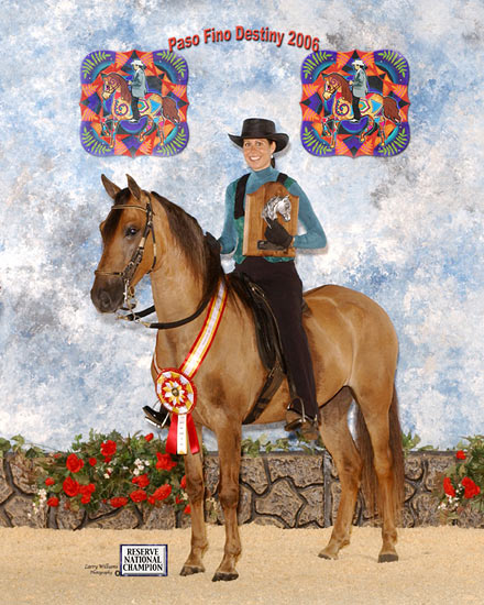 Paso Fino Reserve National Champion